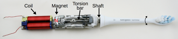 Sonicare toothbrush driver mechanism. As the polarity of the coil switches, the magnet rotates back and forth slightly. The torsion bar transmits the rotation to the shaft, which causes the toothbrush head to vibrate around its axis.