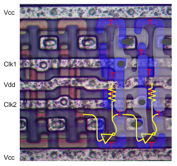 Close up of the cells in an Intel 1405 512-bit shift register memory. The actual photo is on the left, and the circuit is drawn on the right.